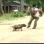 Wściekły reporter vs wściekły pies