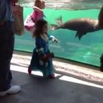 Foka bawi się z dziewczynką