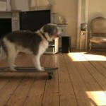 Szalony pies zorganizował... IMPREZĘ!