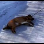 Ten pies nie znosi zimy!