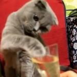 Ten kociak uwielbia szampana!