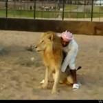 Arab zrobił z lwa... kucyka!