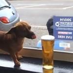 Pies w barze