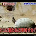 Żółw kontra krokodyl - KTO WYGRA?