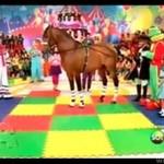 Koń zepsuł show dla dzieci
