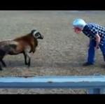 Człowiek vs zwierzę