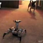 Szczeniaczek kontra robot