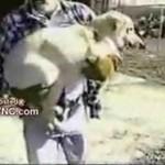 Psy ZAGAZOWANE w schronisku - DRASTYCZNE!!!