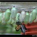 Narodziny motyla