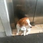 Pies potrafi obsłużyć windę!