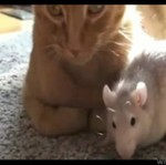 Kot i szczur - przyjaciele!