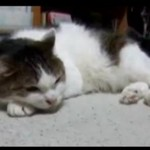 Kot śpiewa bluesa!