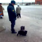Policjant KOPNĄŁ kota!