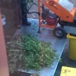 Sąsiad wpadł - likwidacja plantacji