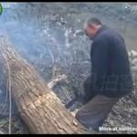 Drwal znokautowany przez drzewo