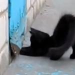 Kociak ratuje psa - WOW!