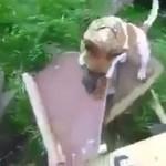 Gdy inżynier zajmie się wychowaniem psa...