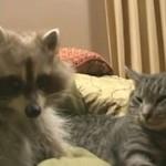 Kot bawi się... z SZOPEM!