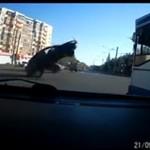 Co dokładnie zrobił ten kierowca!?