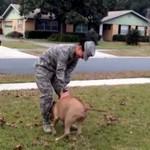 Psy witają żołnierz, wracających z wojny - PIĘKNE!
