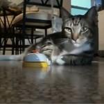 Ten kot ma DZWONEK do wołania służących!