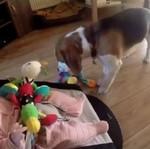 Pies PRZEPROSIŁ dziecko za zabranie zabawki!