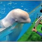 Delfin - ARTYSTA