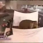 Chris Angel i znikający słoń