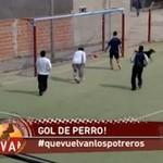 Gol psa w meczu z Argentyną