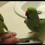 GADATLIWE papużki - ŚMIESZNE!