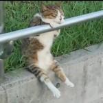 Najbardziej wyczilowany kot świata