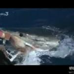 Zaklinaczka rekinów