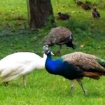 Dubbing w świecie zwierząt - MEGA!