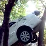Zaparkował... NA DRZEWIE!