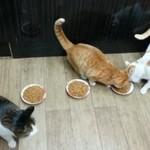 Koty pokazują, jak działa kapitalizm