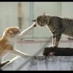Kocia kłótnia - HIT!