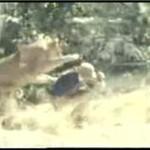 Głodne lwice
