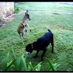 Pies i jelonek GRAJĄ W PIŁKĘ!