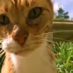 Koty NAĆPANE kocimiętką!