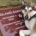 Pies opłakuje śmierć swojego właściciela