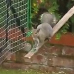 Zbudował plac zabaw... dla wiewiórek!