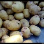 Pająk teleportuje się pomiędzy ziemniakami!