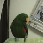 Rozmowna papuga