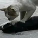 Wzruszający film o kociej przyjaźni