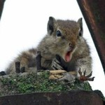 Ta wiewiórka przezcałe życie zbierała orzechy...