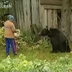 Łakomy niedźwiadek
