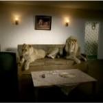 Życie lwów