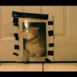 Trollowanie kota