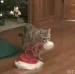 Świąteczna zabawka dla kotka