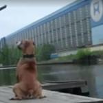 Chciał zrobić zdjęcie aportującego psa